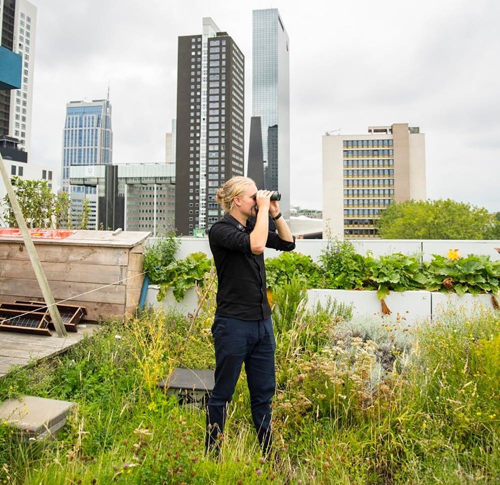 birds-buildings_masterproefstudio-joris-van-reusel-2020-2021