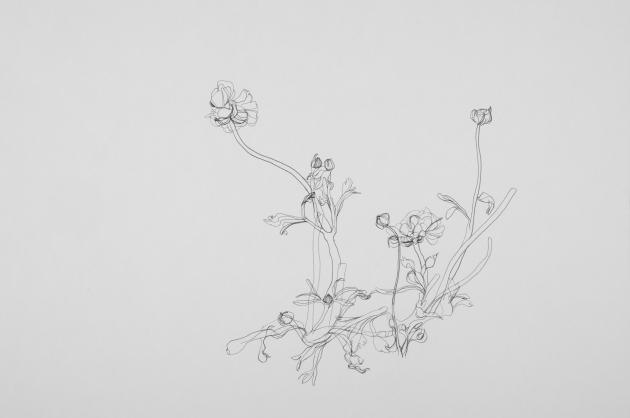 ok-bloemen_630_418_s_c1